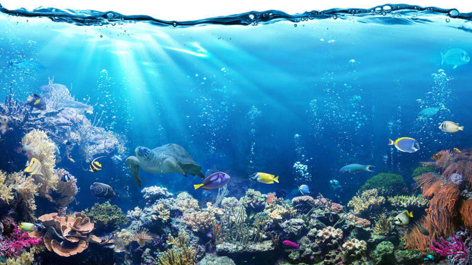 El carbono que absorbe el mar es entre un 30% y 60% | RTVE.es