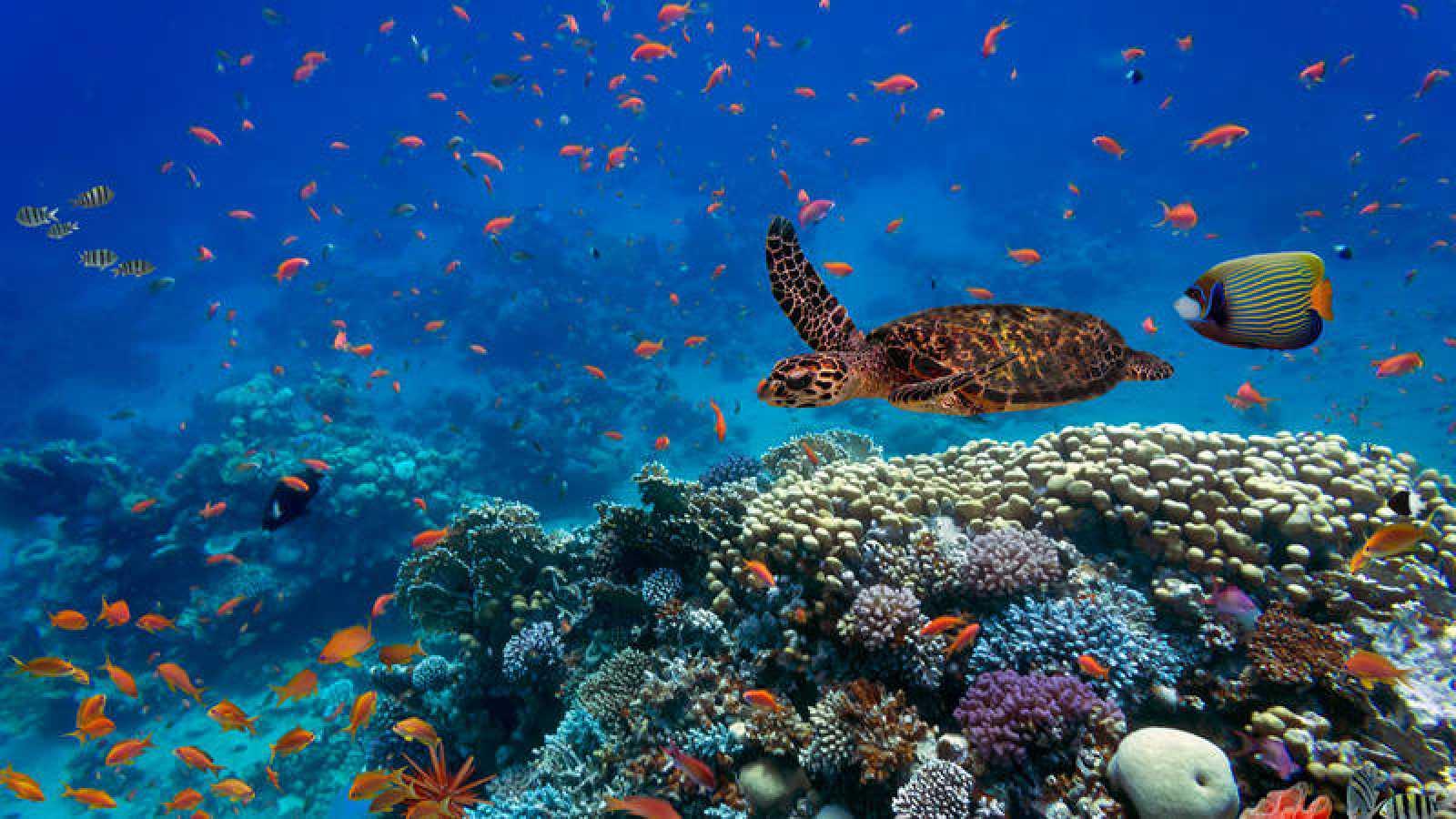 Resultado de imagen para ecosistemas