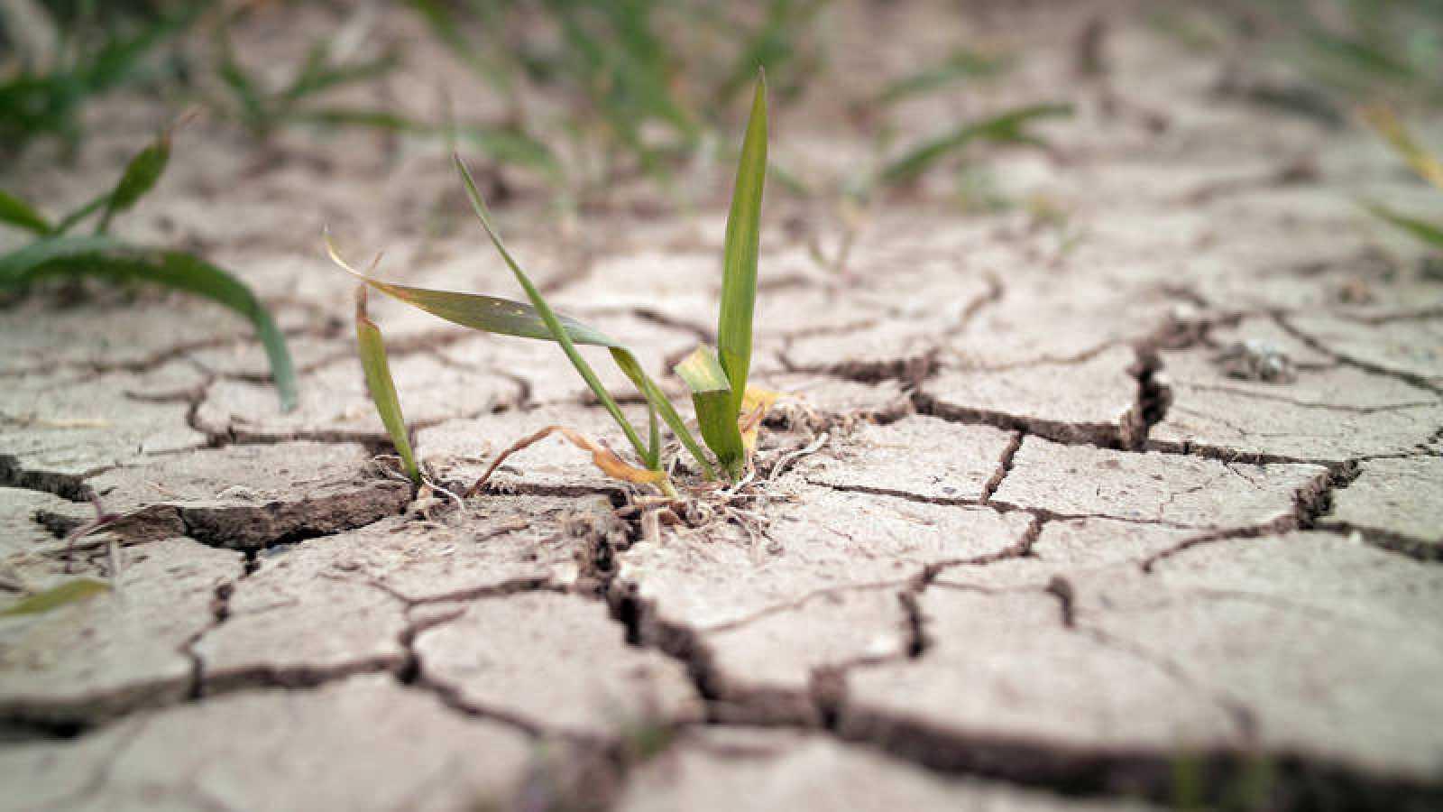 Brotes en mitad de la tierra agrietada y seca