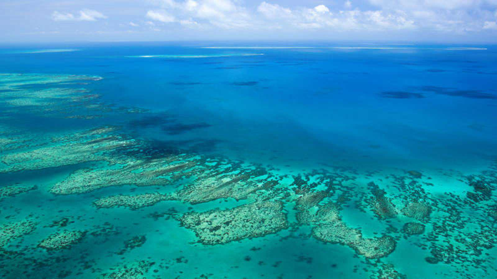 La Gran Barrera de Coral: Supervivencia del cambio climático