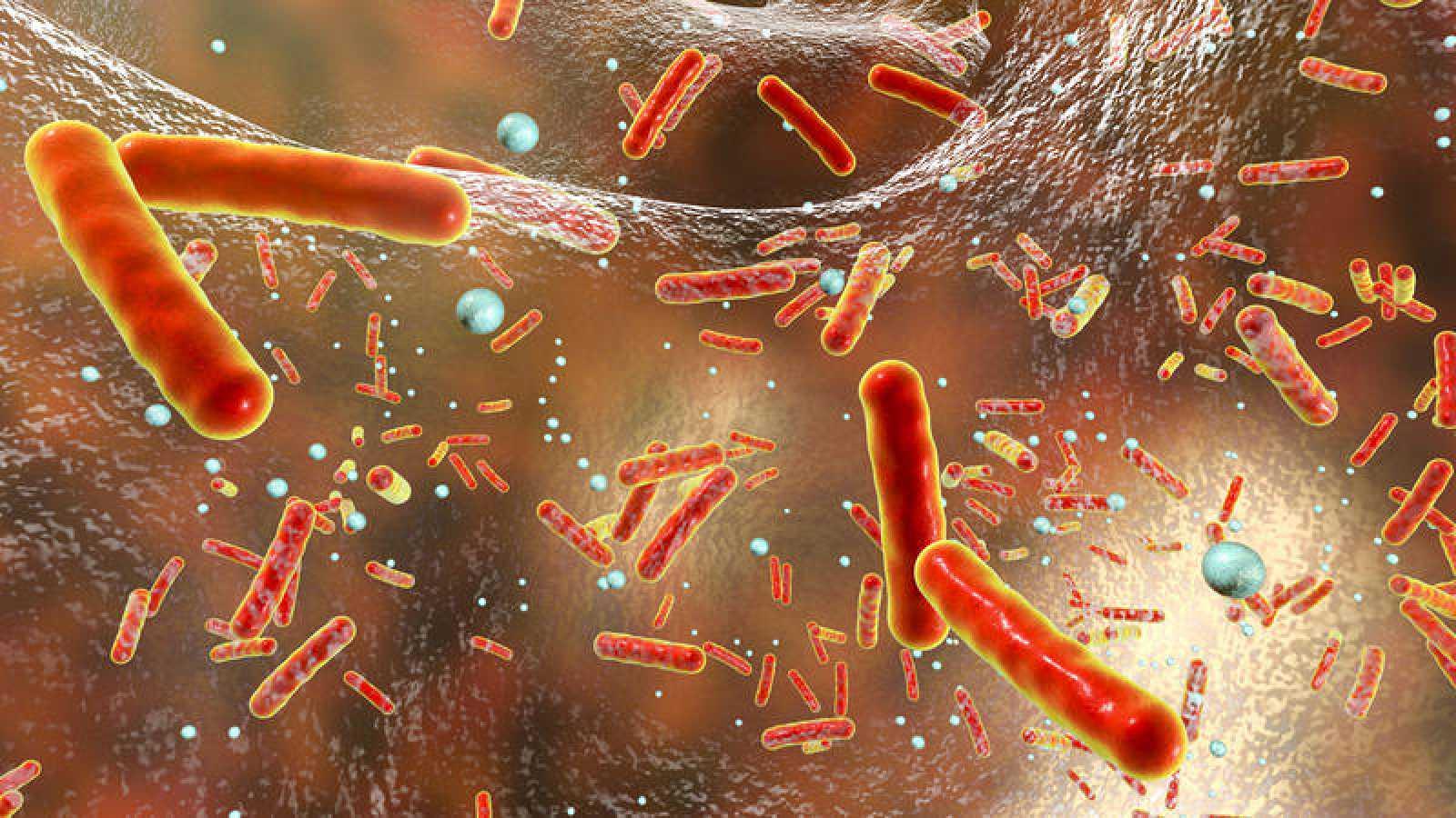 Imagen recurso de una bacteria resistente a los antibióticos dentro de un 'biofilm'