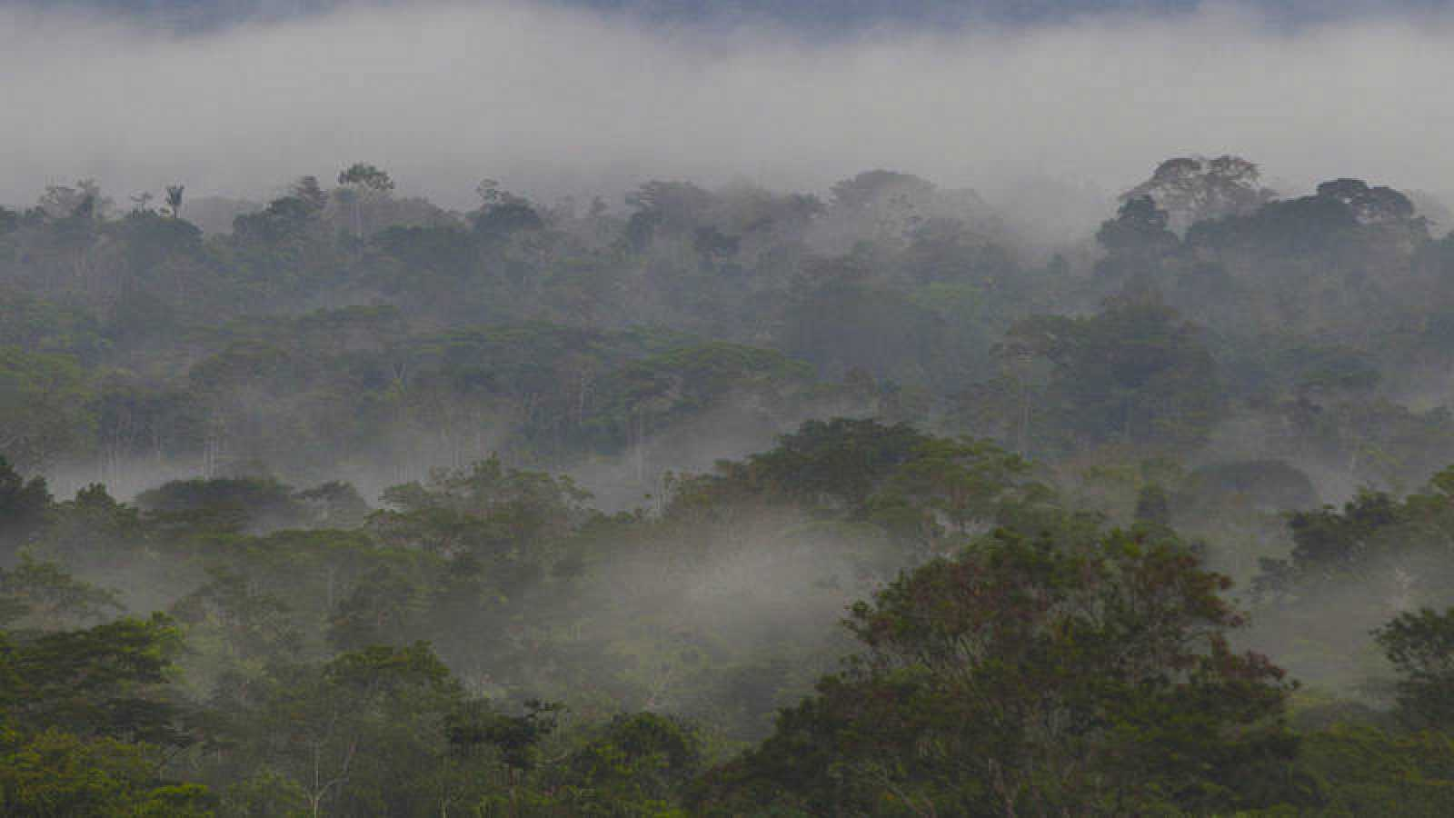 Imagen de la Amazonia ecuatoriana.