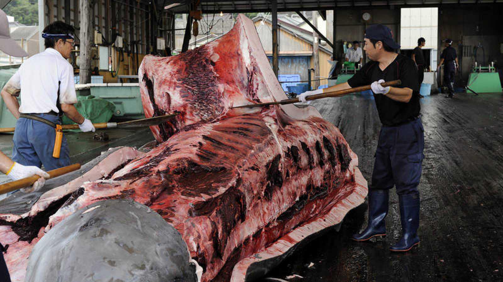 Imagen de archivo de varios pescadores quitando la piel a una ballena en Wada Port, Japón.