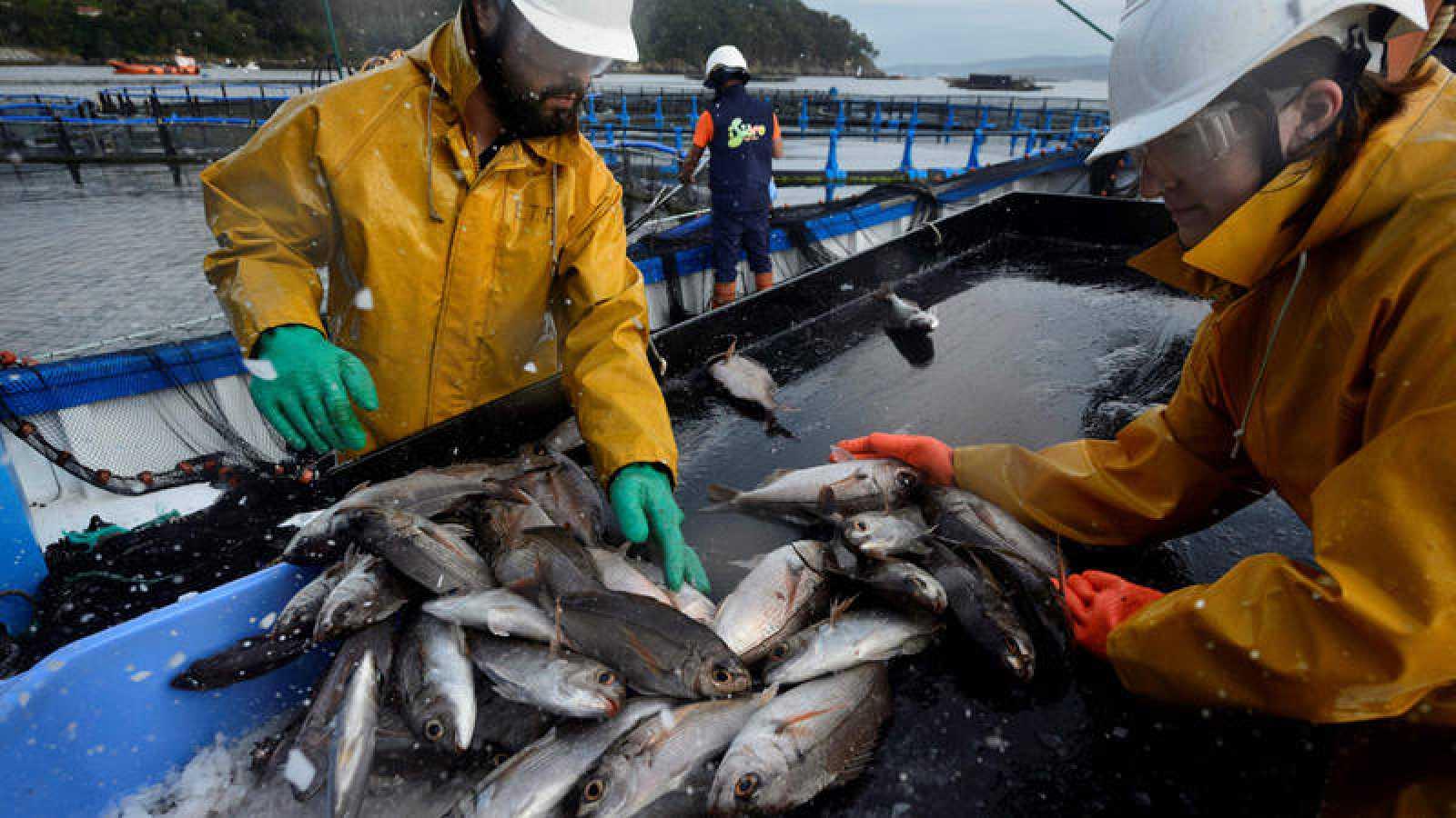 Trabajadores de una granja marina