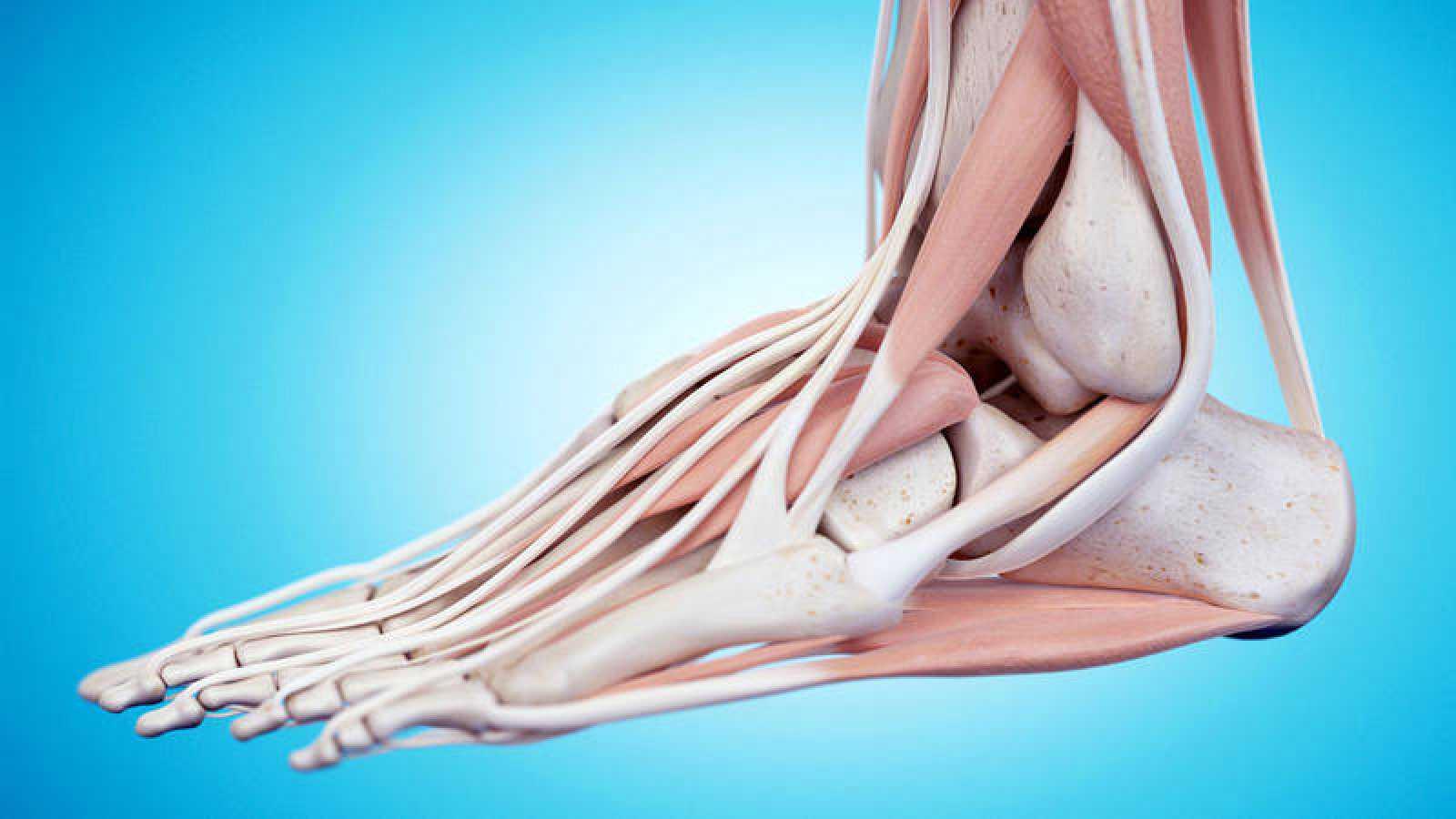 Ilustración anatómica de un pie.