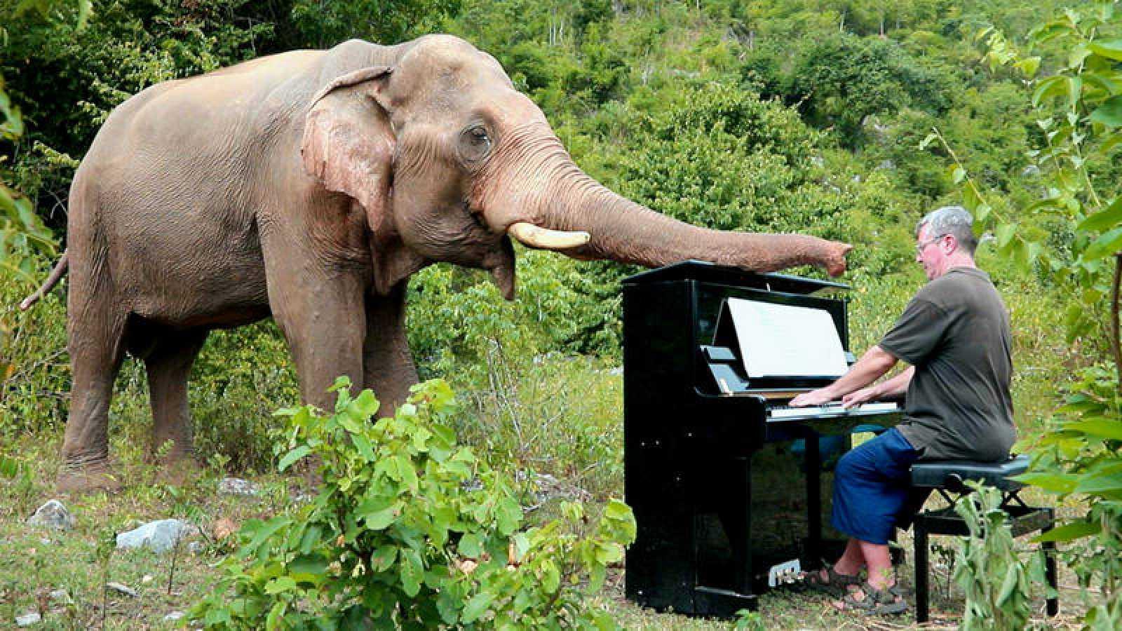 Paul Barton y sus conciertos para elefantes