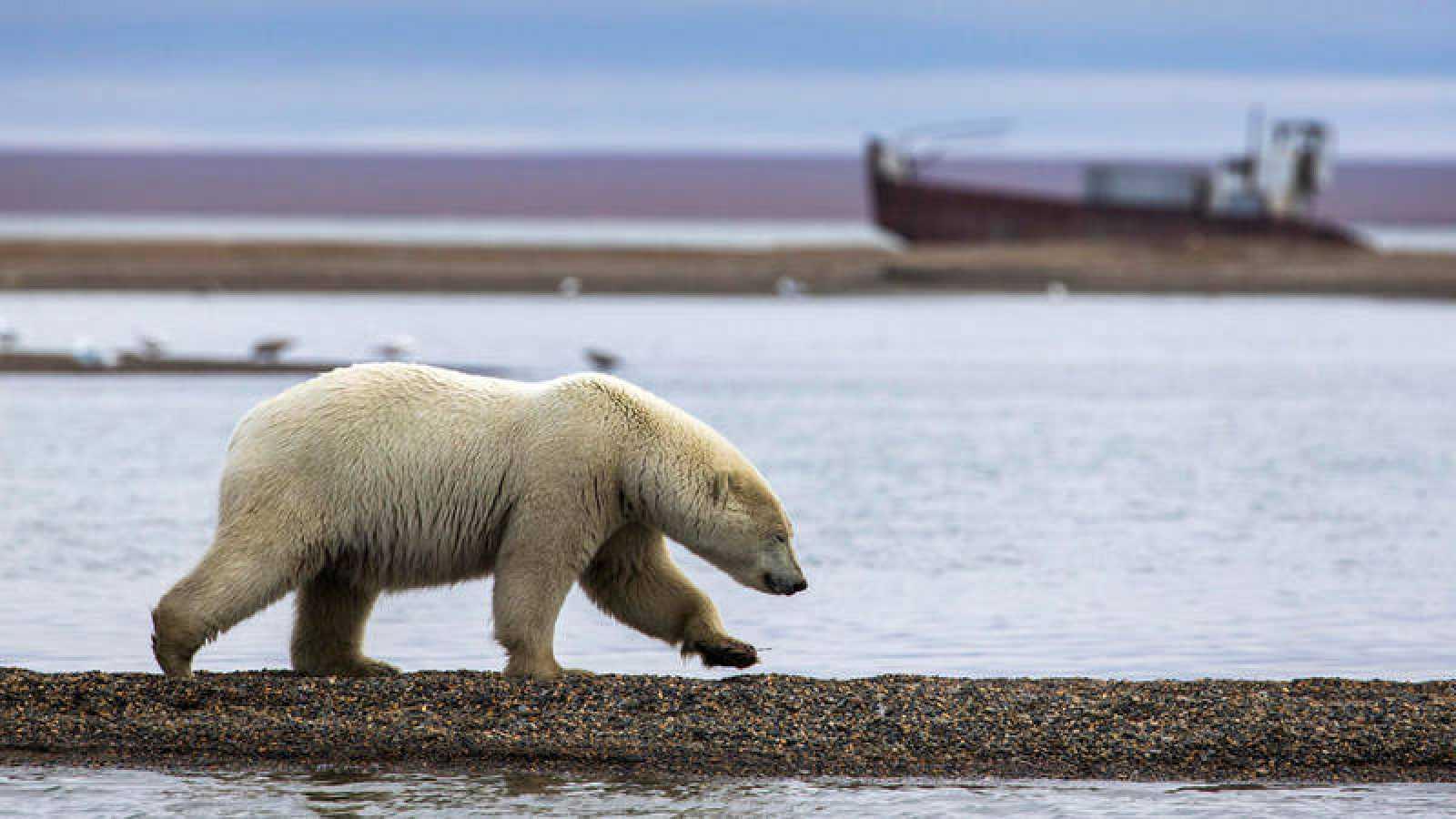 En caso de derretirse por completo la capa de hielo de Groenlandia, provocaría un aumento de siete metros en el nivel mundial de los océanos.