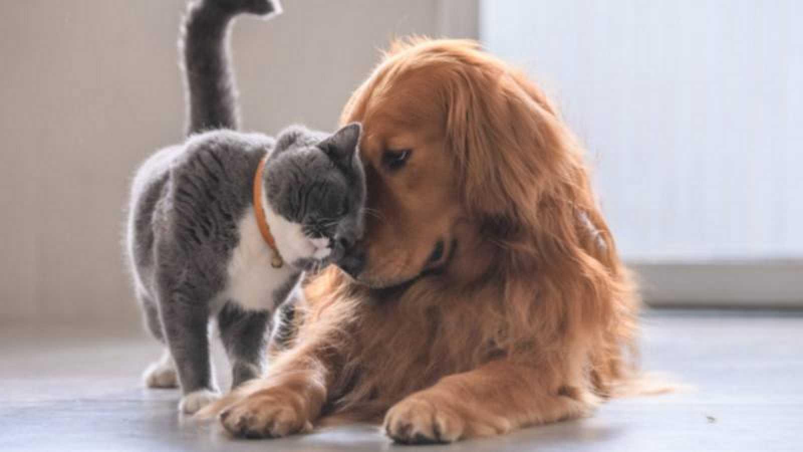 Cuánto sabes sobre perros y gatos