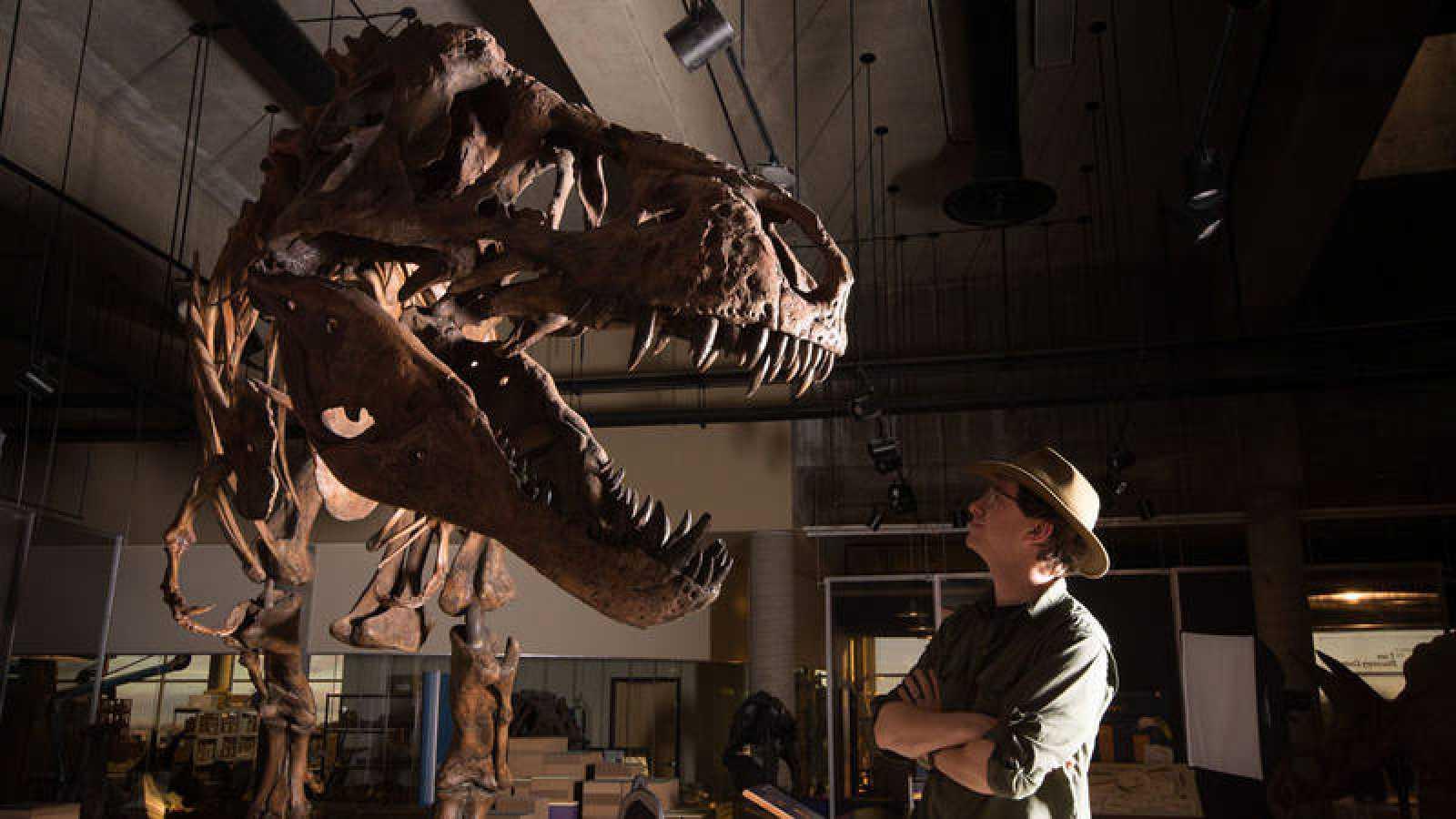 Scotty, apodado así por una botella de whisky con la que se celebró su descubrimiento, es el más grande que todos los dinosaurios carnívoros descubiertos.
