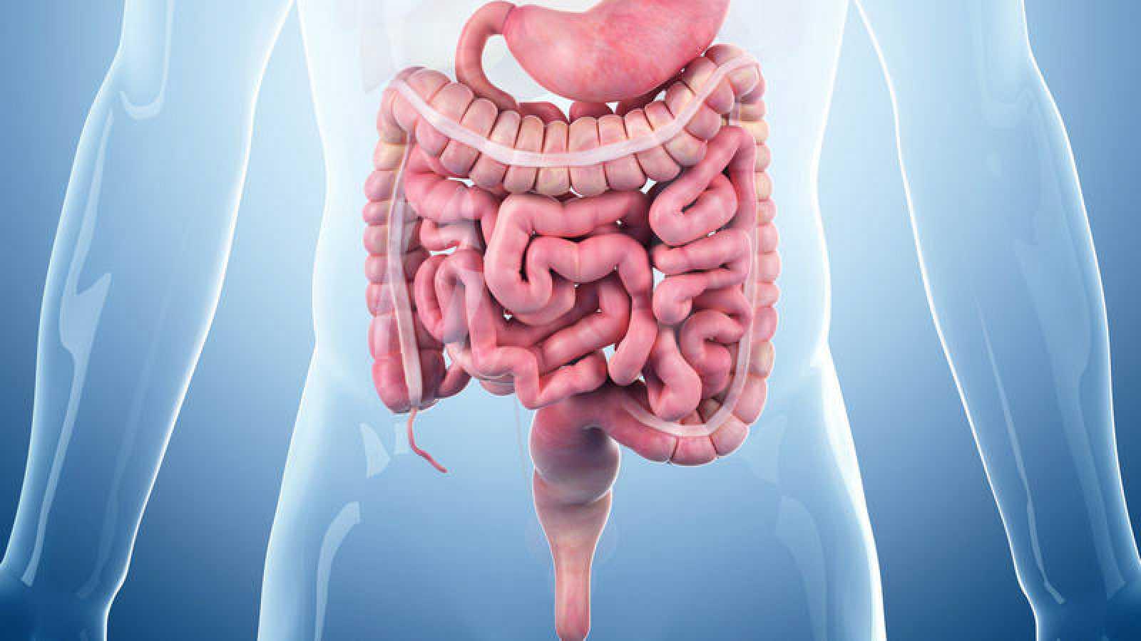 Un estudio demuestra que el párkinson se origina en el tracto digestivo -  RTVE.es