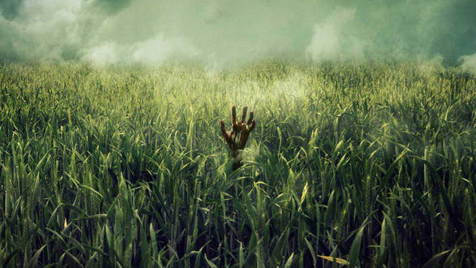 ¿Qué pasa en la hierba alta?