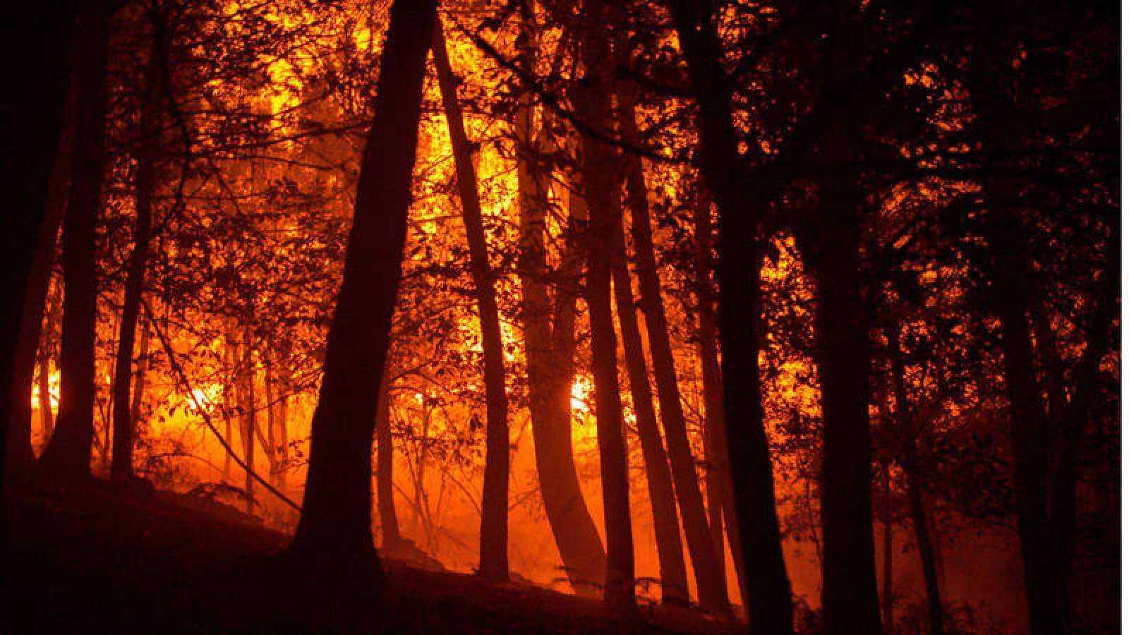 El fuego ha arrasado 74.610 hectáreas, casi cuatro veces más que hace un año