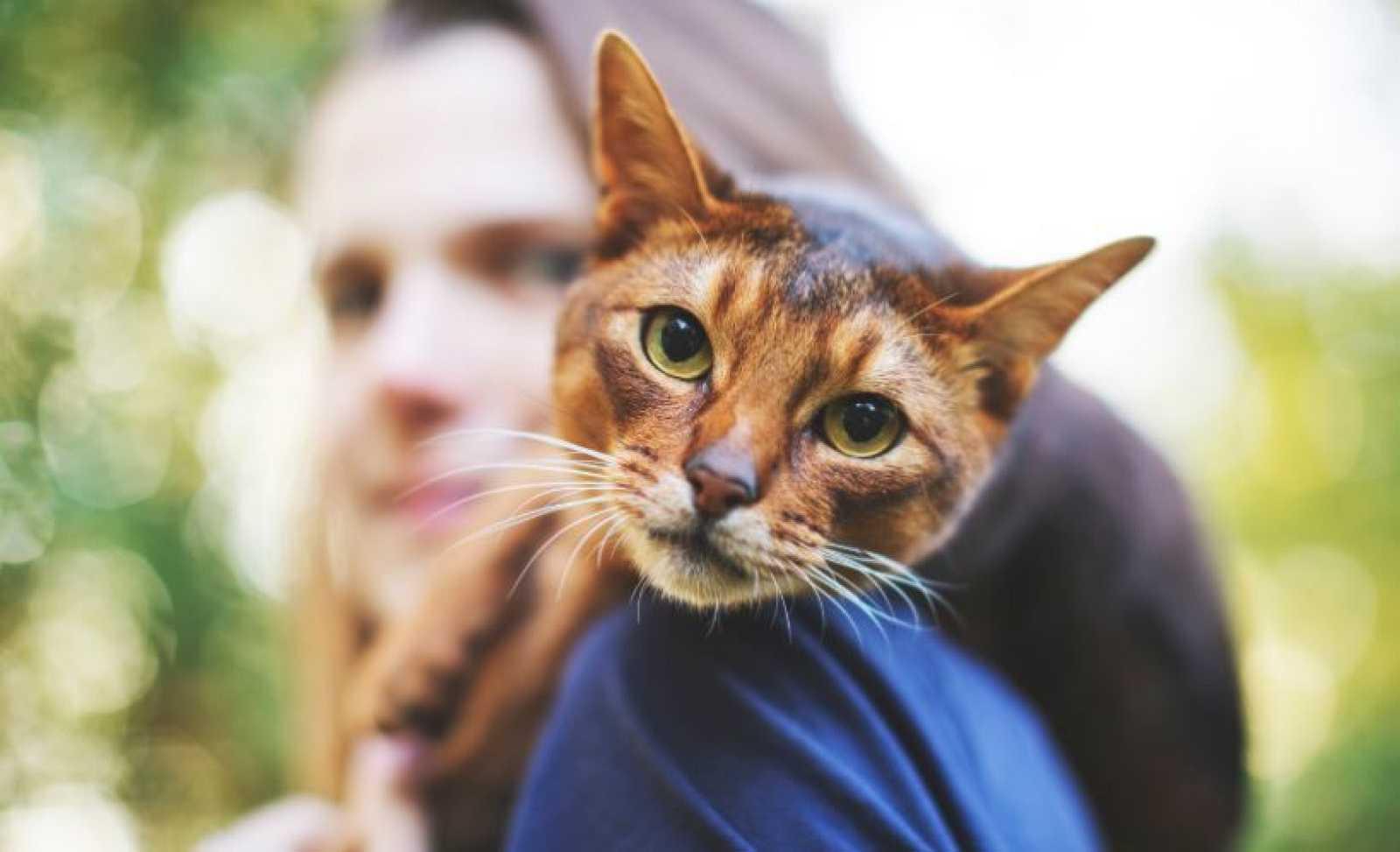 Qué gato eres según tu personalidad