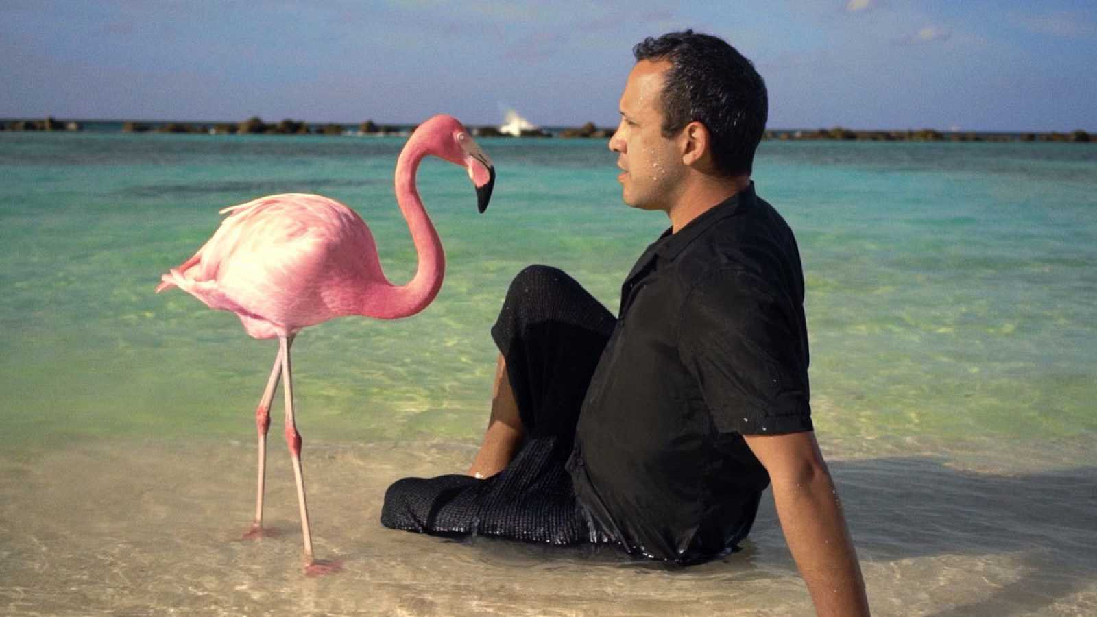The mystery of the Pink Flamingo', para encontrarse a uno mismo