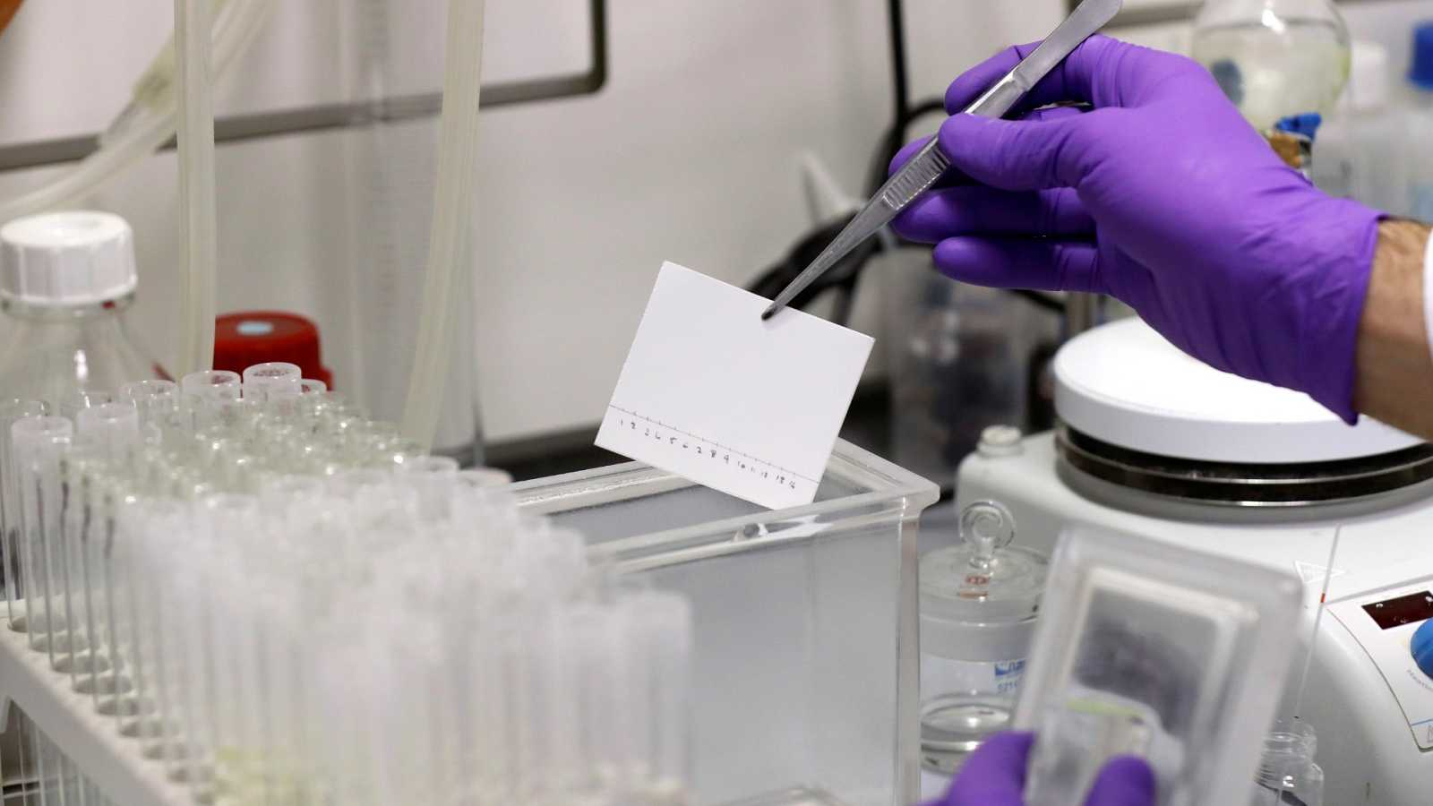Técnicos de laboratorio trabajan en la búsqueda de una vacuna para el coronavirus