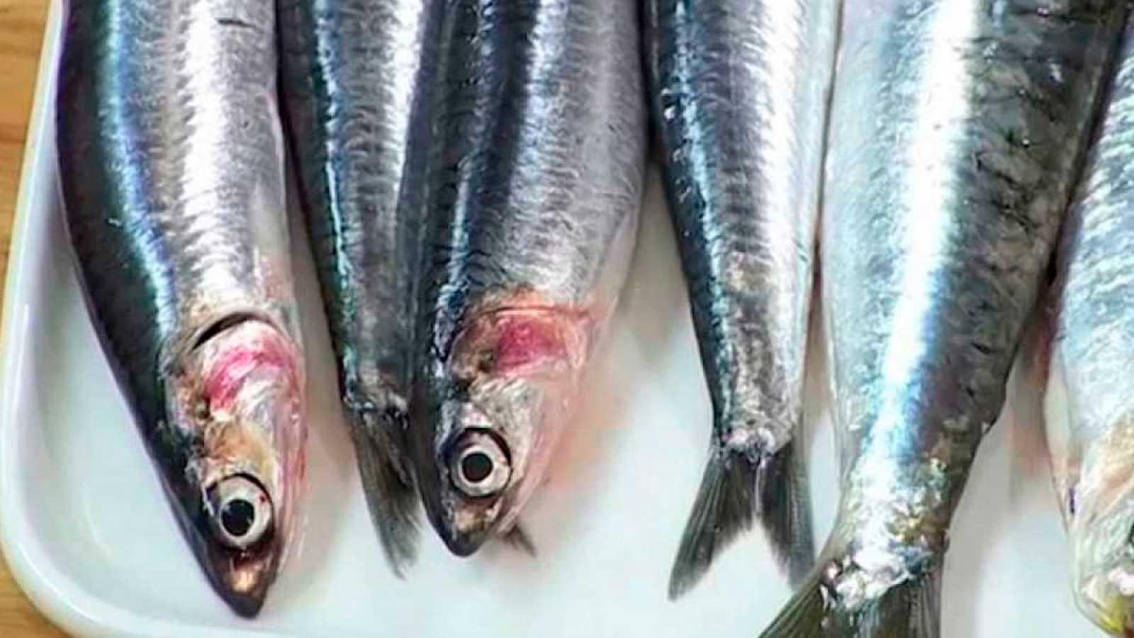 Sardines amb Carme Ruscalleda