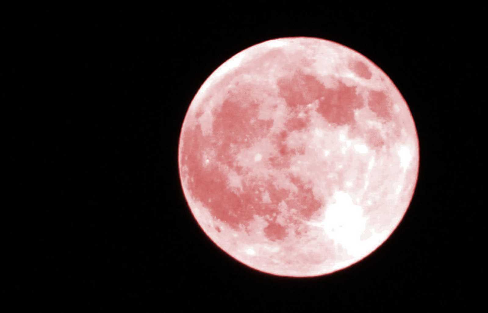 """La """"superluna rosa"""" toma su nombre de una planta silvestre que florece en primavera en Estados Unidos."""