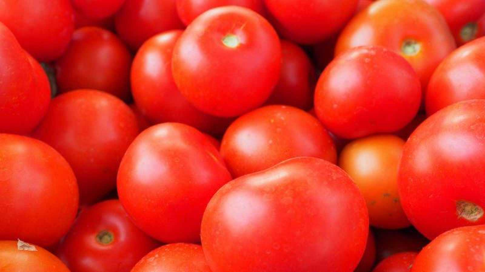 Tostada integral con tomates cherry, albahaca y huevo poché