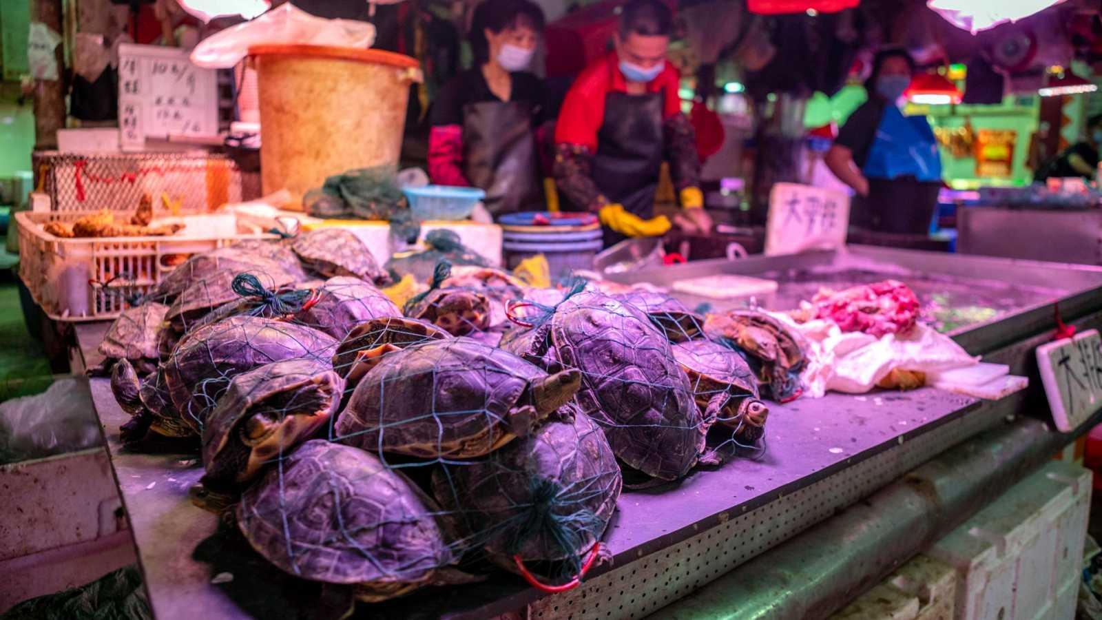 Venta de tortugas vivas en el mercado de agricultores de Xihua en Guangzhou, provincia de Guangdong, China