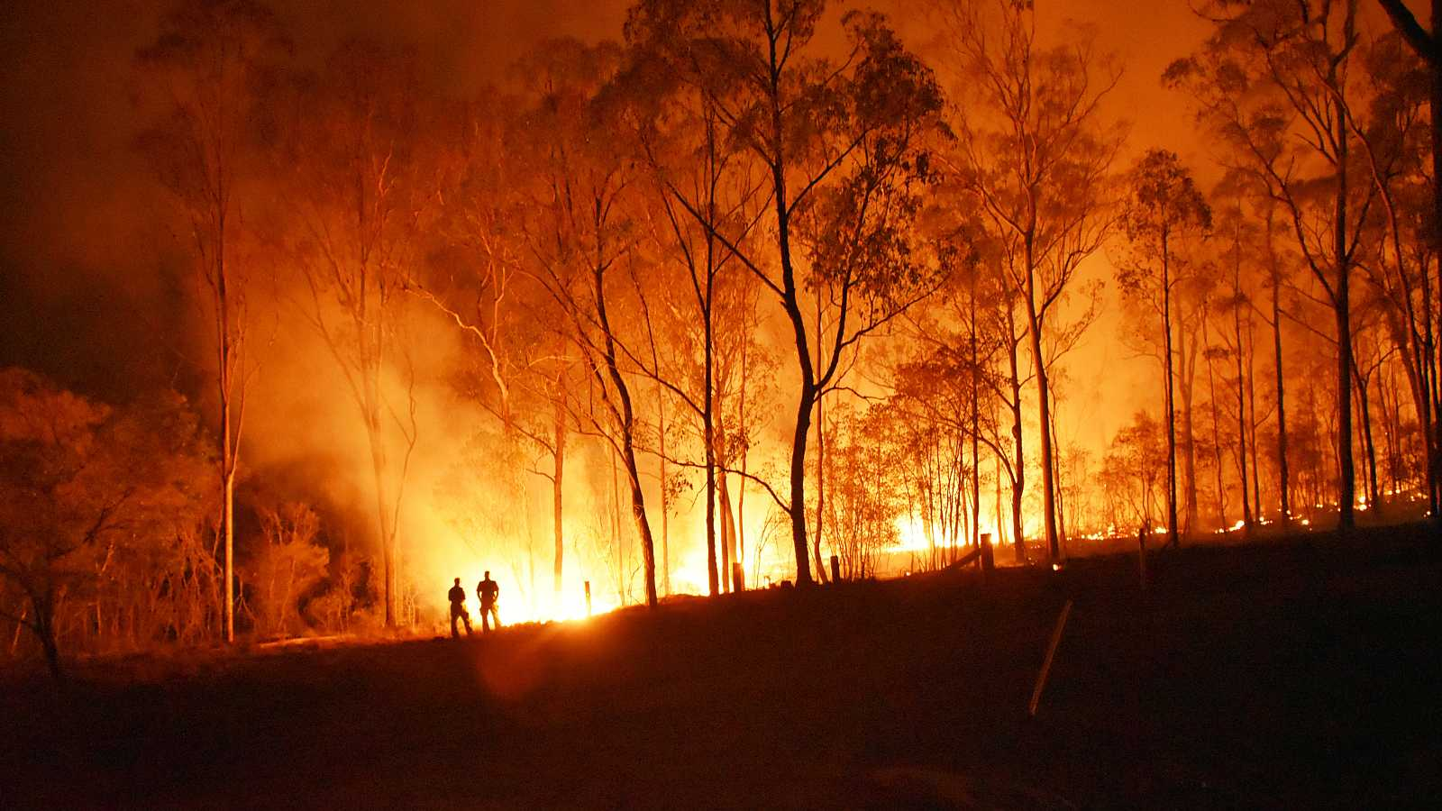 En los grandes incendios forestales (GIF), arde el 40% o más de la superficie total afectada.
