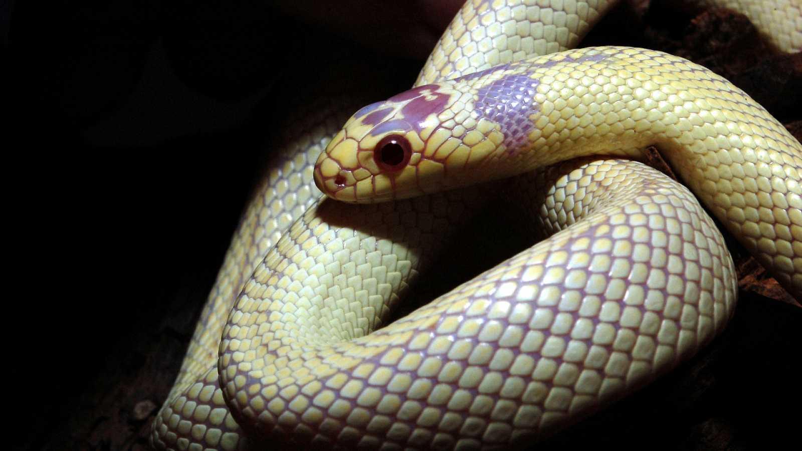 Aquí la Tierra - Día Mundial de las Serpientes