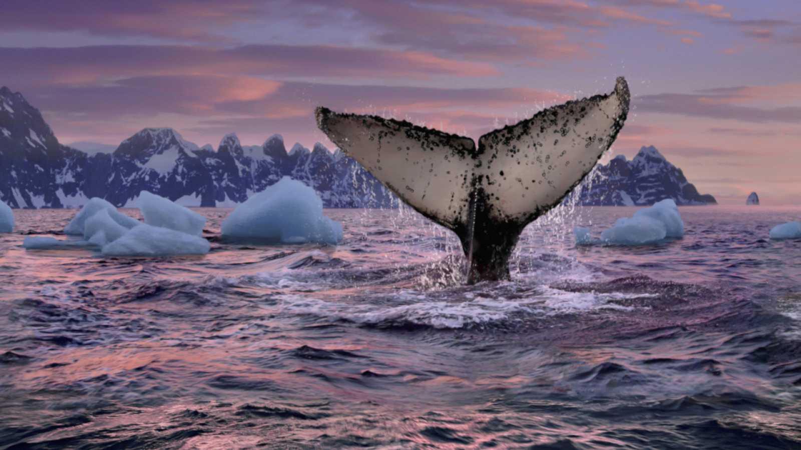 Ballenas en el Ártico
