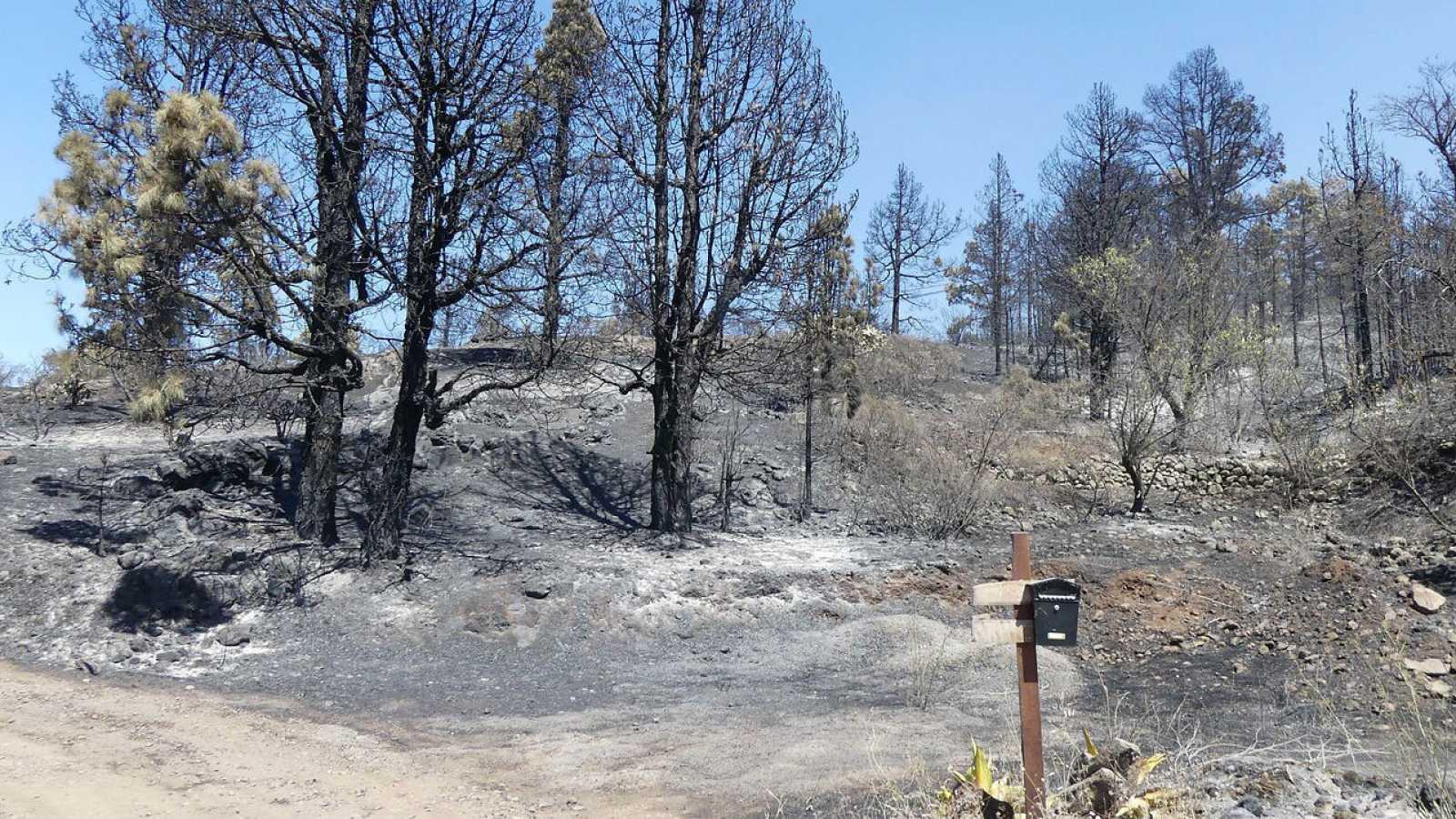 Una de las fincas agrícolas calcinadas por el incendio forestal que afecta a la isla de La Palma, a su paso por el barrio de El Castillo del municipio de Garafía.