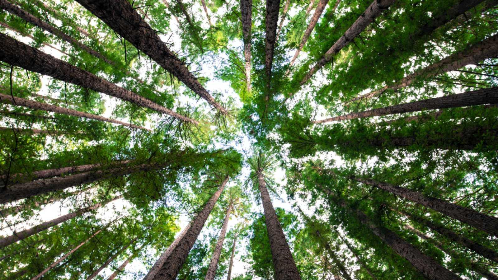 Así es Ecosia, el buscador ecológico que planta y protege árboles