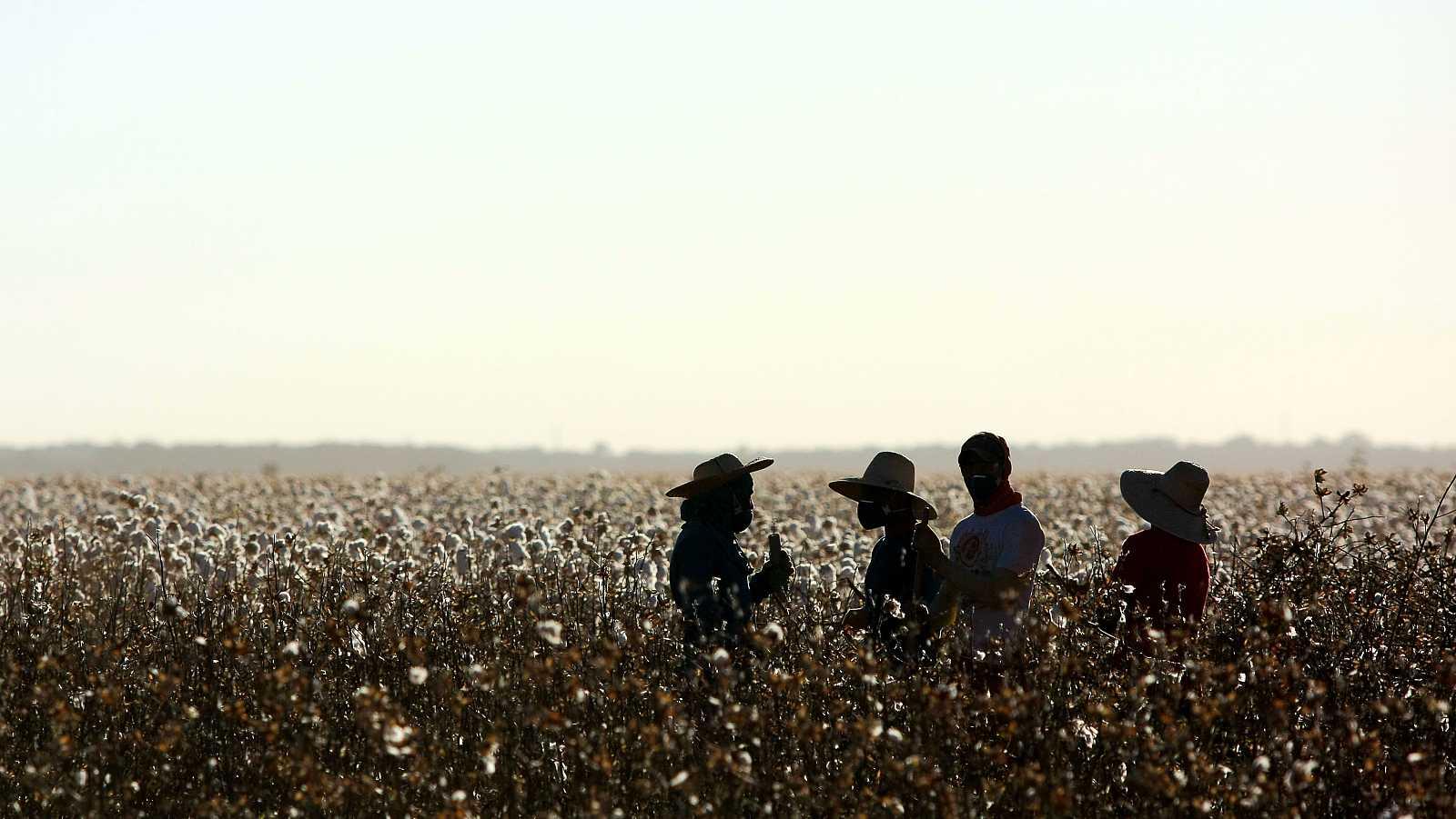 Trabajadores hablan en un campo de algodón.