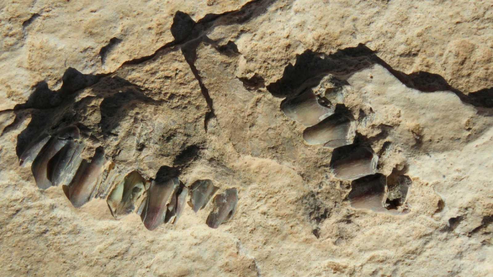 Huellas de animales encontradas en la superficie del antiguo lago de Alathar, Arabia