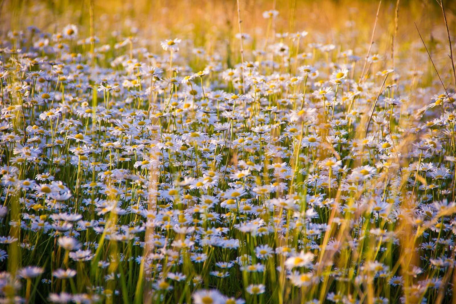 Flores silvestres olvidadas