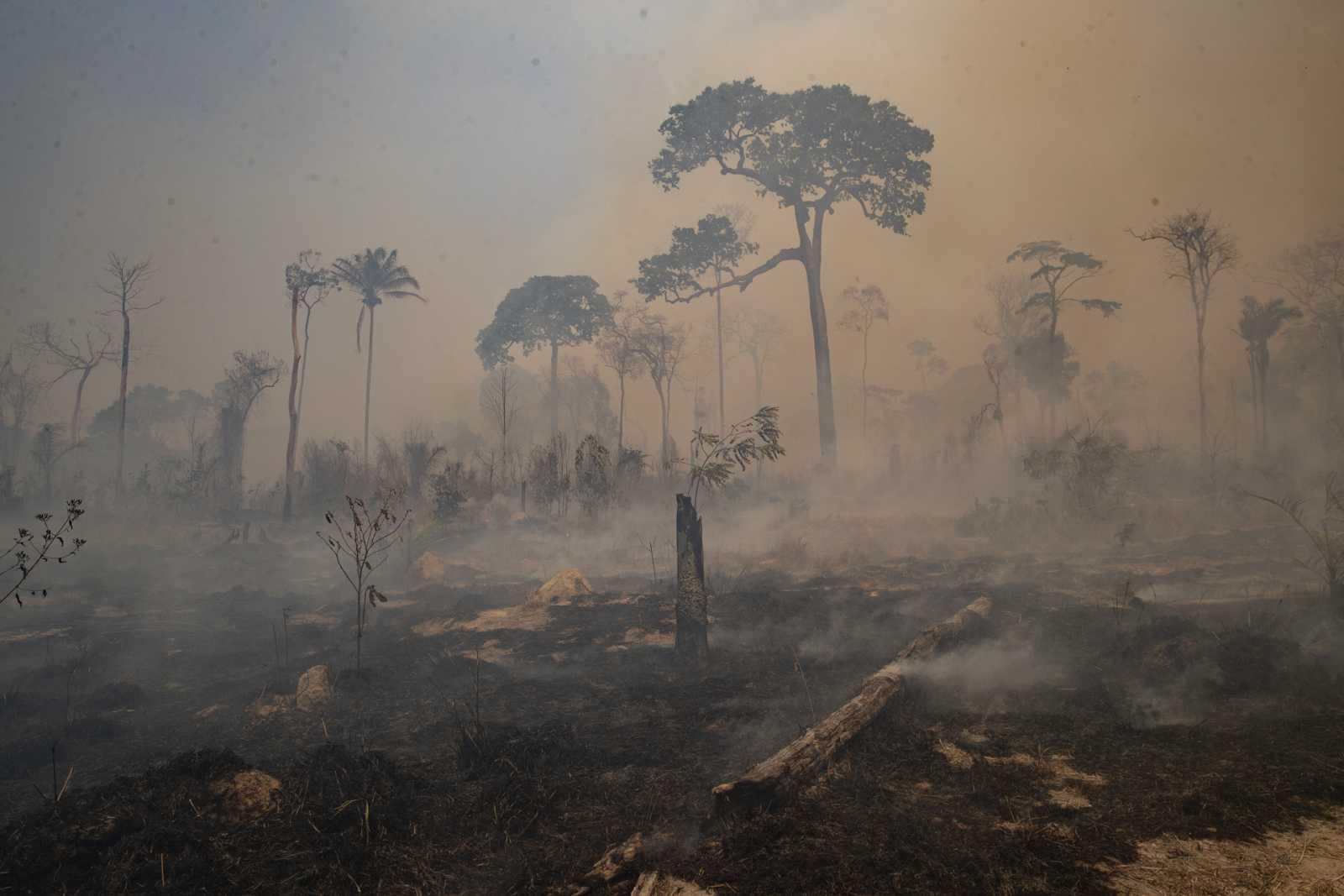 Efectos del cambio climático: mayores incendios