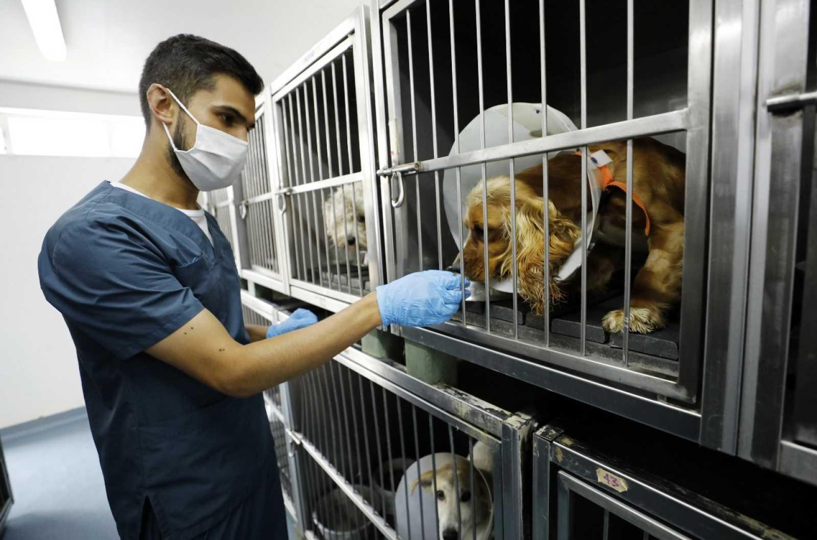 Un joven cuida de varios perros en una protectora