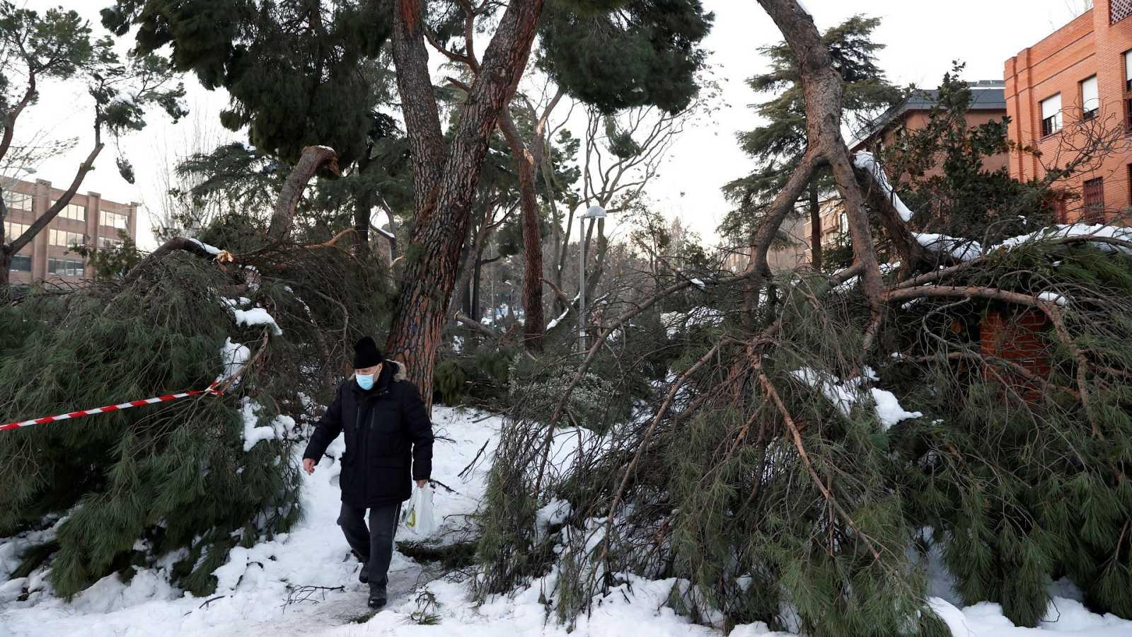 Un hombre camina junto a varios árboles caídos por la borrasca en Madrid