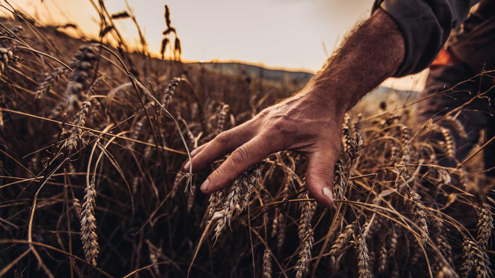 Agricultor paseando por sus campos