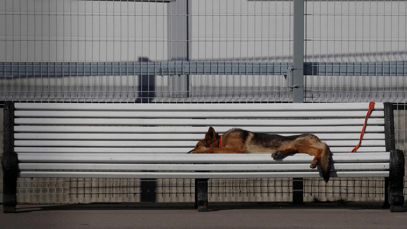 Un perro duerme en un banco