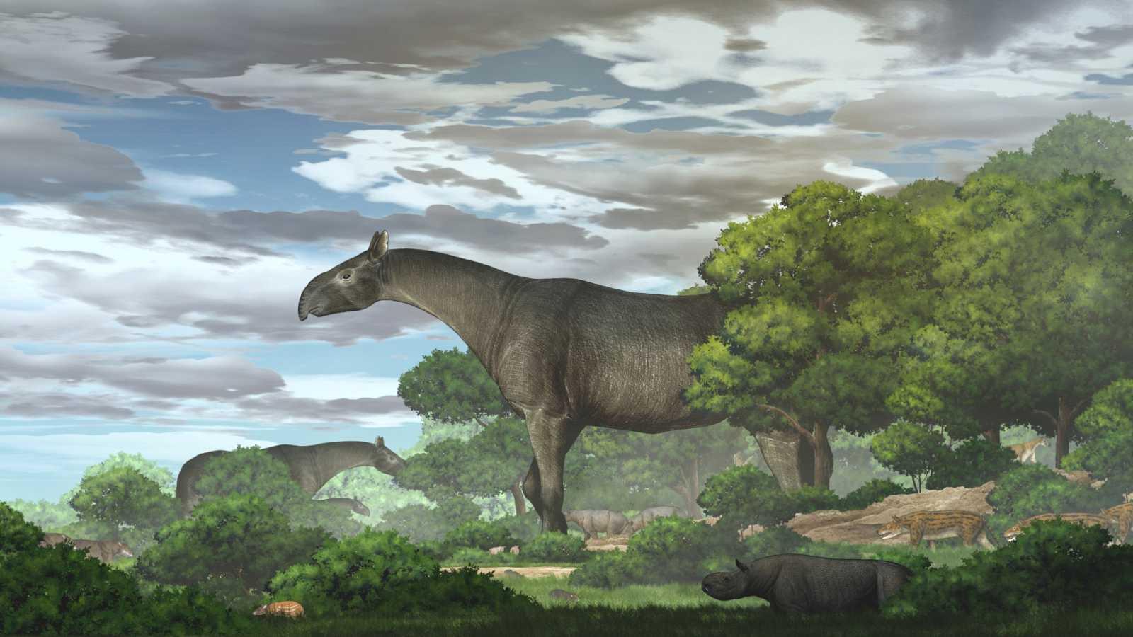 Recreacióndel rinoceronte giganterealizada por la Academia de Ciencias de China.