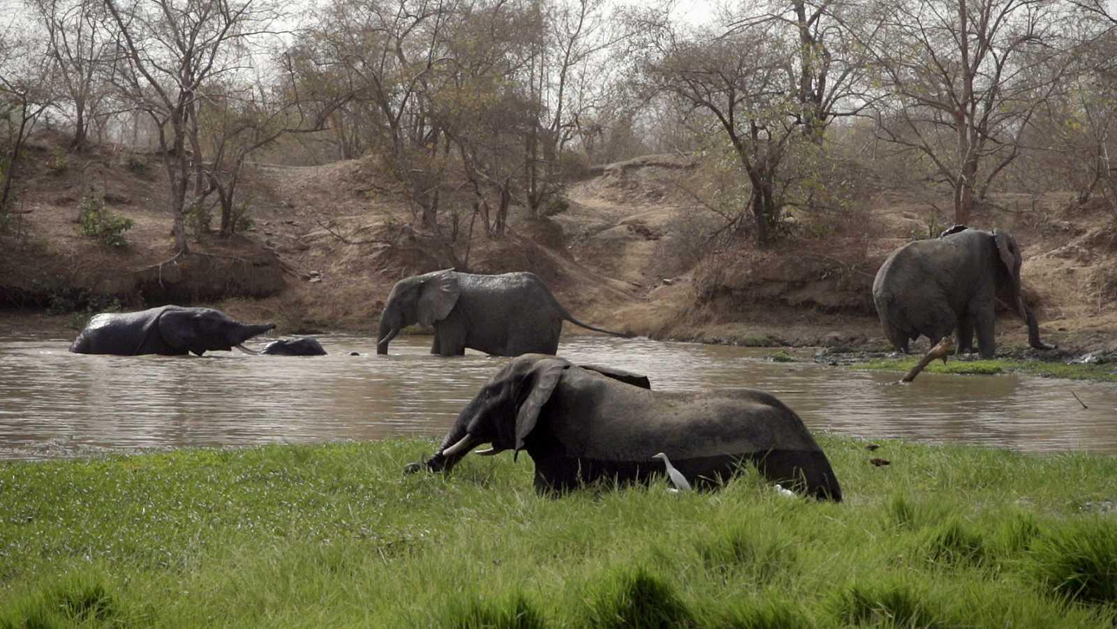 El Parque Nacional de Mole cuenta con una reserva única de 600 elefantes.