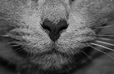 ¿El pelo de gato produce alergia?