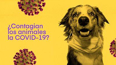 ¿Contagian los animales la COVID-19?
