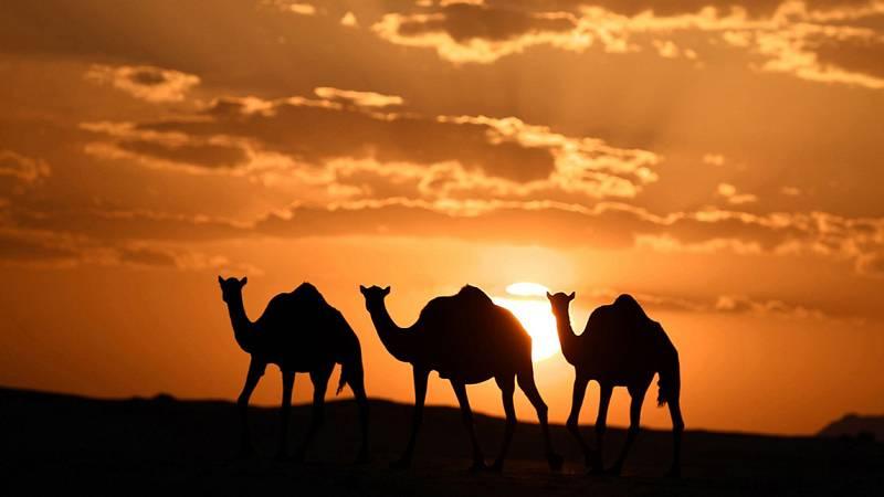 ¿Cómo será el Dakar 2020 en Arabia Saudí?