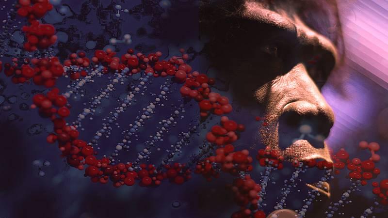 Hélice de ADN recreado sobre la imagen de una escultura de un neandertal