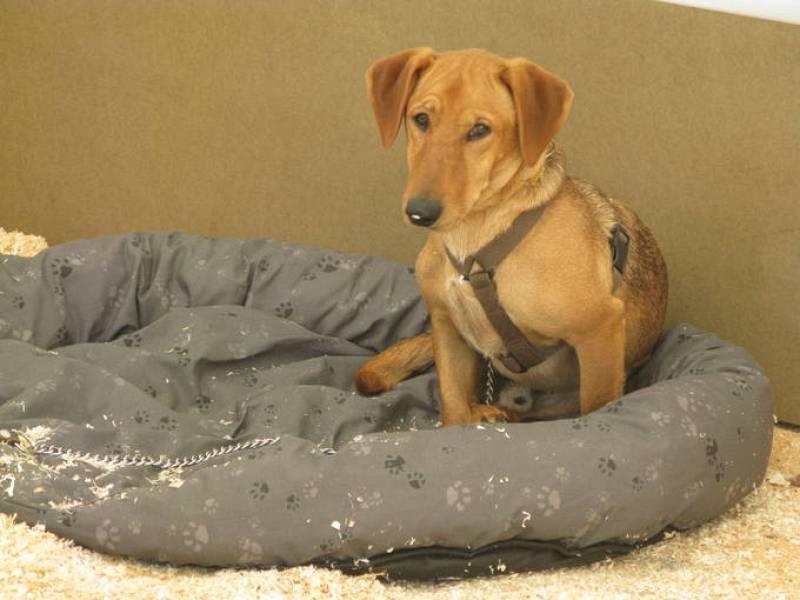 Galindo es uno de los perros que se pueden adoptar en este salón cuyo principal objetivo es fomentar la adopción de los animales de compañía. La historia de su nombre es curiosa: Un Guardia Civil lo encontró en la carretera y le llamó así.