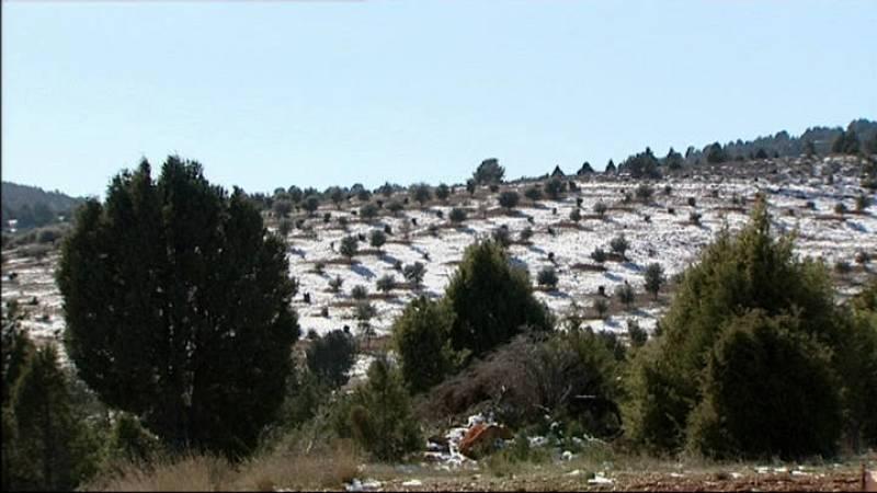 Paisaje con encinas cultivadas en Sarrión