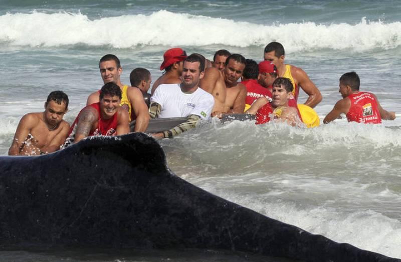 Vecinos y trabajadores no son capaces de mover a la ballena por sus propios medios