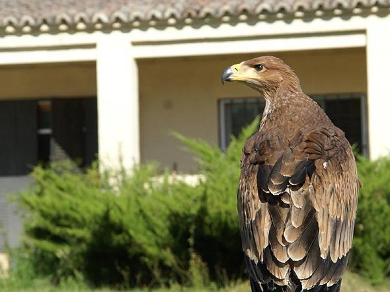 María Airam es el primer ejemplar de águila imperial reproducida en cautividad.