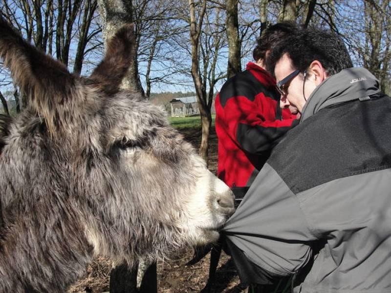 El burro Junior, de la casa grande de Xanceda, haciendo amigos