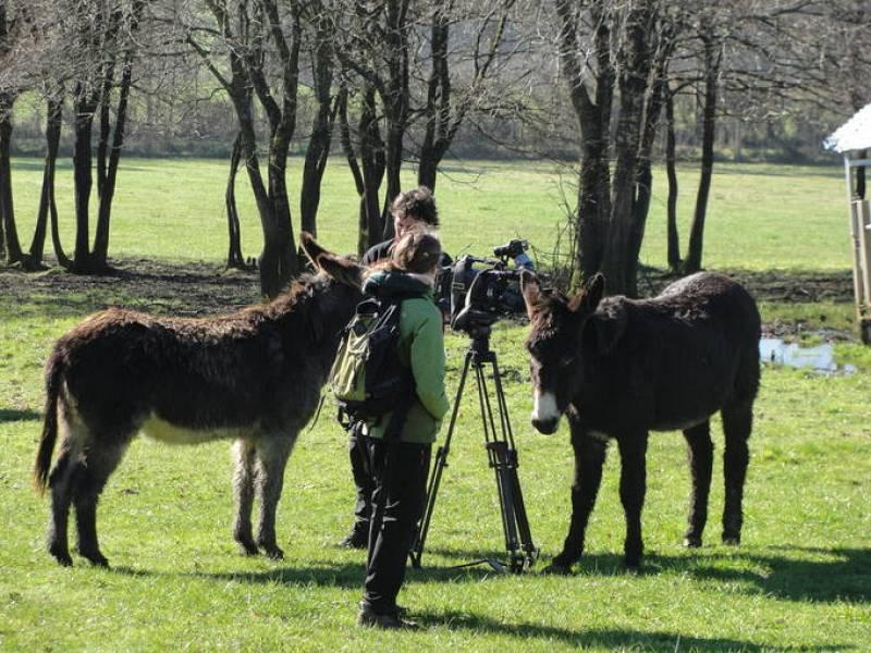 Los burros de la casa grande de Xanceda, en plena entrevista