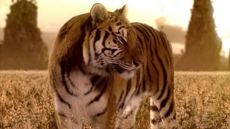 Las mejores imágenes del videoclip de 'Amanecer'