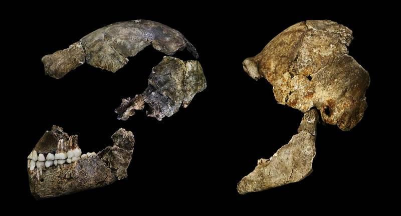 Un cráneo de 'Homo naledi' encontrado en la cámara Dinaledi